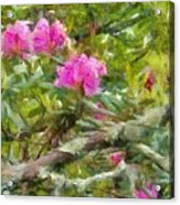 Pink With Lichen Acrylic Print