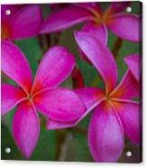 Pinkalicious Acrylic Print
