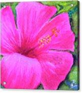 Pinkhawaii Hibiscus #505 Acrylic Print