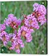 Pinkish Red Flower Bloom Close Up Acrylic Print