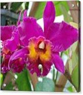 Pinkishyellow Orchid Acrylic Print