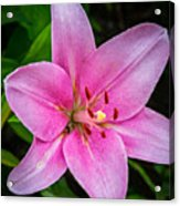 Pinkly Yours Acrylic Print