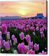 Pinks At Sunset Acrylic Print