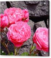 Pinks On The Rocks Acrylic Print