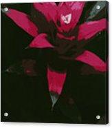 Pinky Poster Acrylic Print