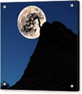 Pinon Pine And Moon Zion National Park  Acrylic Print