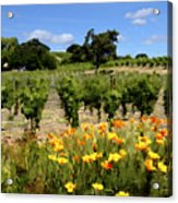 Pinot Noir And Poppies Acrylic Print