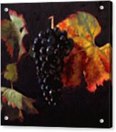 Pinot Noir Grape With Autumn Leaves Acrylic Print