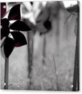 Pinwheels Acrylic Print by Mamie Thornbrue
