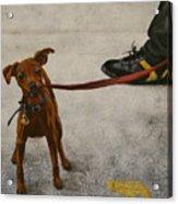 Pisa Puppy Acrylic Print