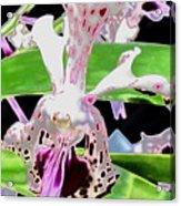 Pisgah Versicolor Acrylic Print
