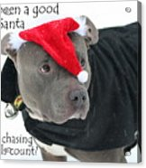 Pit Bull Christmas Two Acrylic Print