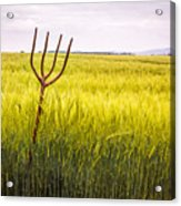 Pitch Fork In Wheat Field Acrylic Print