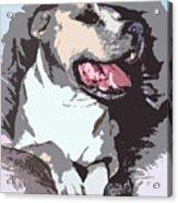 Pittbull Colors Acrylic Print