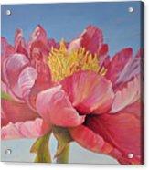Pivoine Ouverte Acrylic Print