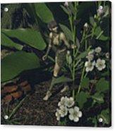 Pixie 1 Acrylic Print