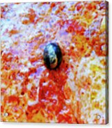 Pizza Pie With Olive Acrylic Print