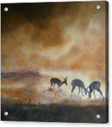 Plain Dusty Acrylic Print