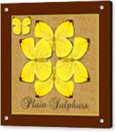 Plain Sulphur Butterfly Wheel Acrylic Print