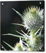 Plant 09-01-18 Acrylic Print