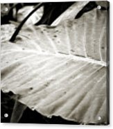 Plant 8650 Acrylic Print