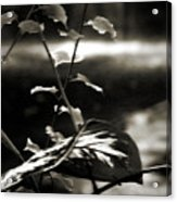 Plant 8657 Acrylic Print