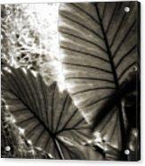 Plant 8661 Acrylic Print