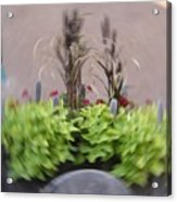 Plant Circle Acrylic Print