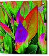 Plant Details Acrylic Print