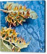 Plant Galls Acrylic Print