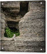 Plant Growing In Wall Acrylic Print