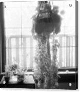 Plant In The Window  Acrylic Print