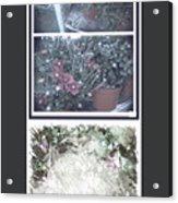 Plant Life  Acrylic Print