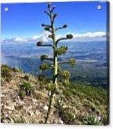 Plant On Volcano Slope Acrylic Print