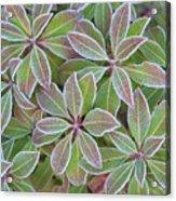 Plant Pattern Acrylic Print