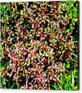 Plant Power 4 Acrylic Print