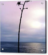 Plant Silhouette Over Ocean Acrylic Print