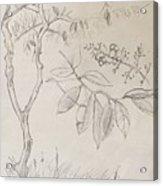 Plant Study Acrylic Print