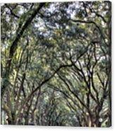 Plantation Drive Acrylic Print