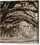Plantation Drive Live Oaks Acrylic Print