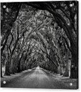 Plantation Oak Alley Acrylic Print