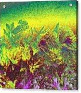 Plantation Acrylic Print