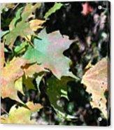 Planting Fields / Leaves Acrylic Print