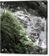 Plants By The River Acrylic Print