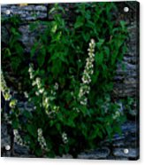 Plants Grow Anywhere Acrylic Print