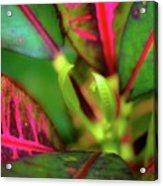 Plants In Hawaii Acrylic Print