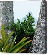 Plantside The Island Acrylic Print