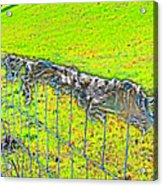 Plastic Sheeting On Fence Acrylic Print