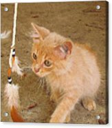 Play Time With Kitty Acrylic Print