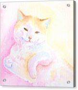 Playful Cat I Acrylic Print